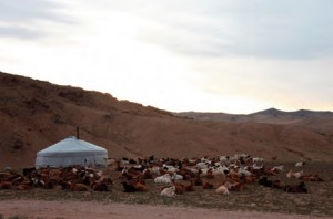 Mongolia, high impact from herding too many animals.
