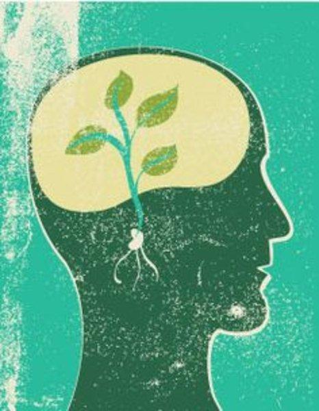 seed mind