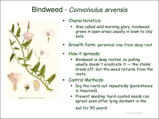 weeds-2009-81-638