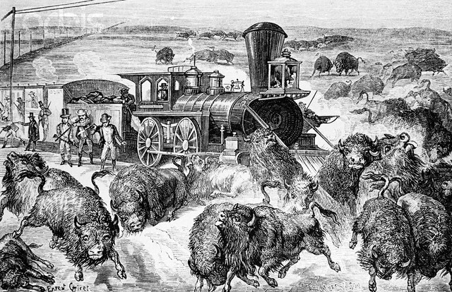 Slaughter of Buffalo on Kansas Pacific Railroad --- Image by © Bettmann/CORBIS