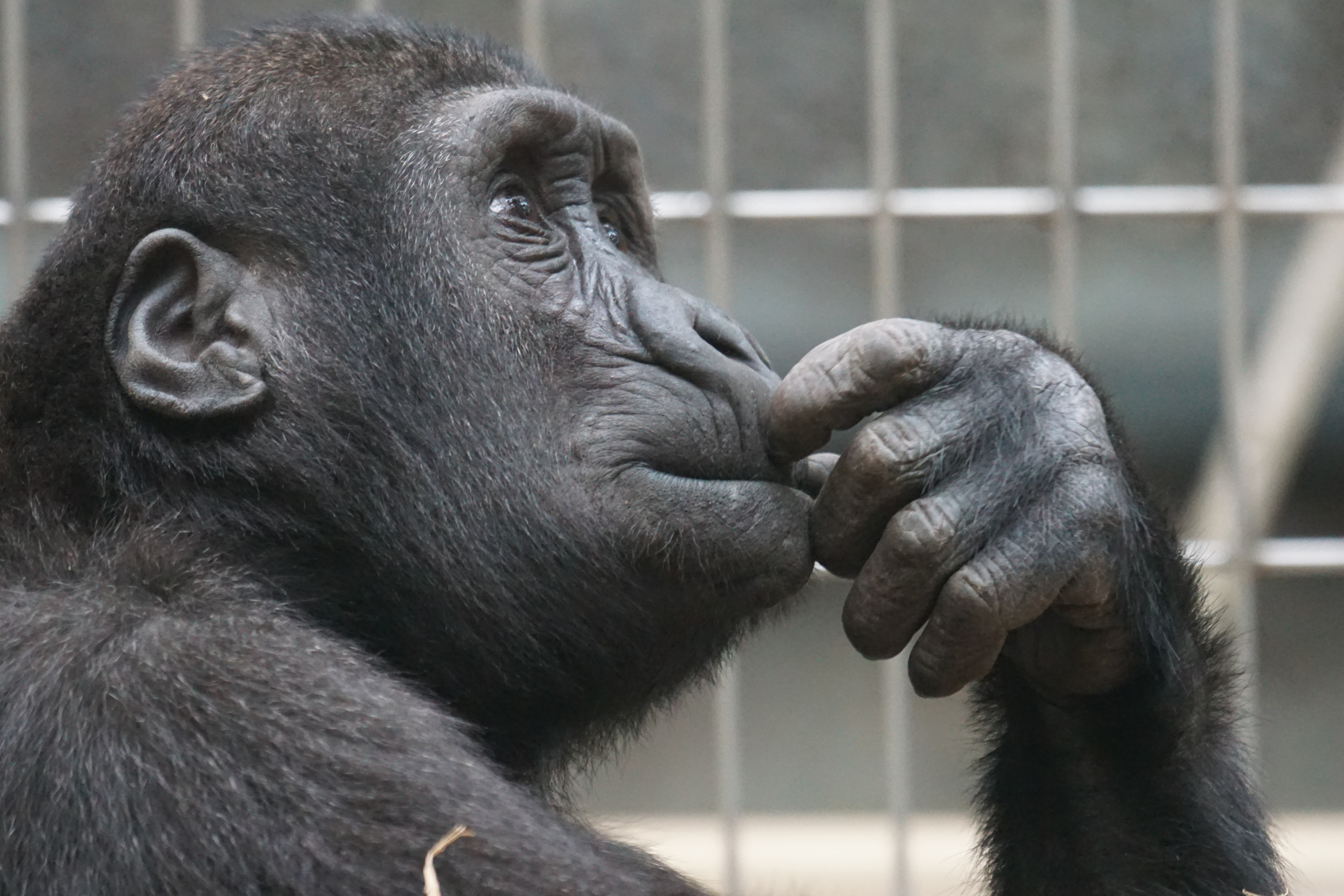 One of Us | Can (non-human) animals know their own existence?