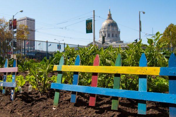 Hyperlocal Food | Growing a Garden on City Land