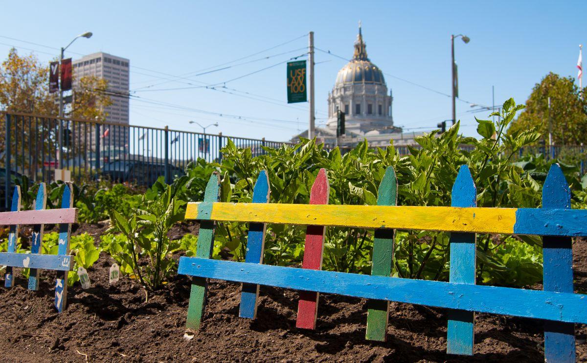 Hyperlocal Food   Growing a Garden on City Land