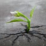 sprout-survival