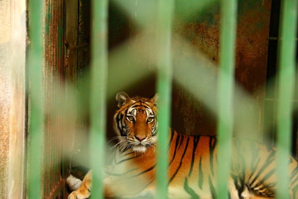 Is There Still a Place for Zoos?