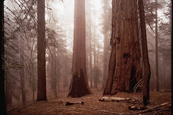 Reader's Essay   The Grieving Tree: A Reflection