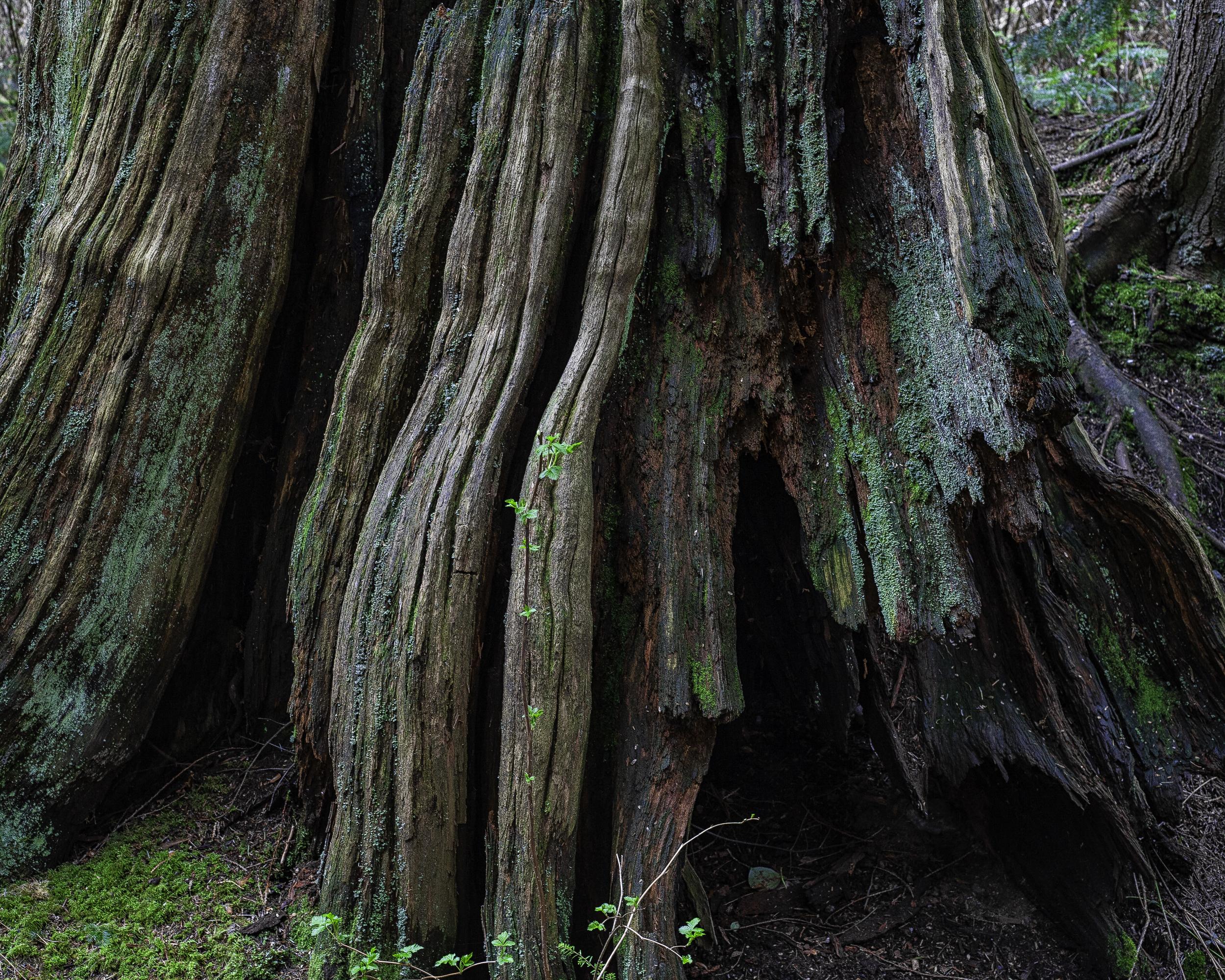 Сокол лес транс