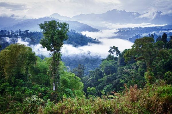 SAMARU | Living the spirit of the Amazon