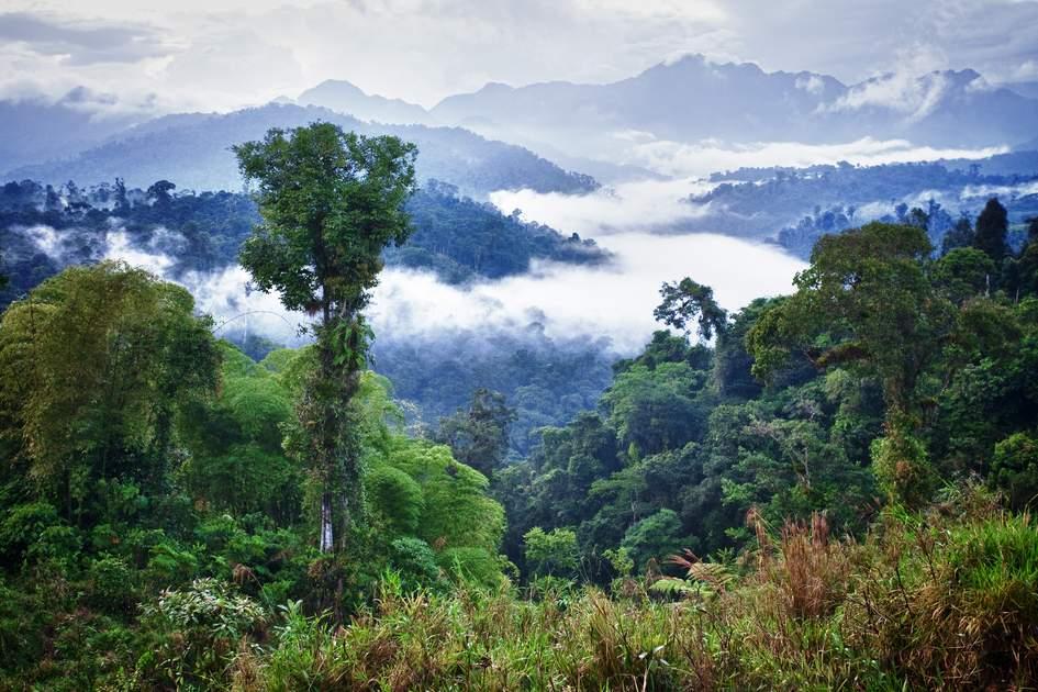SAMARU   Living the spirit of the Amazon