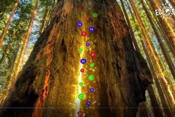 VIDEO | How Trees Talk