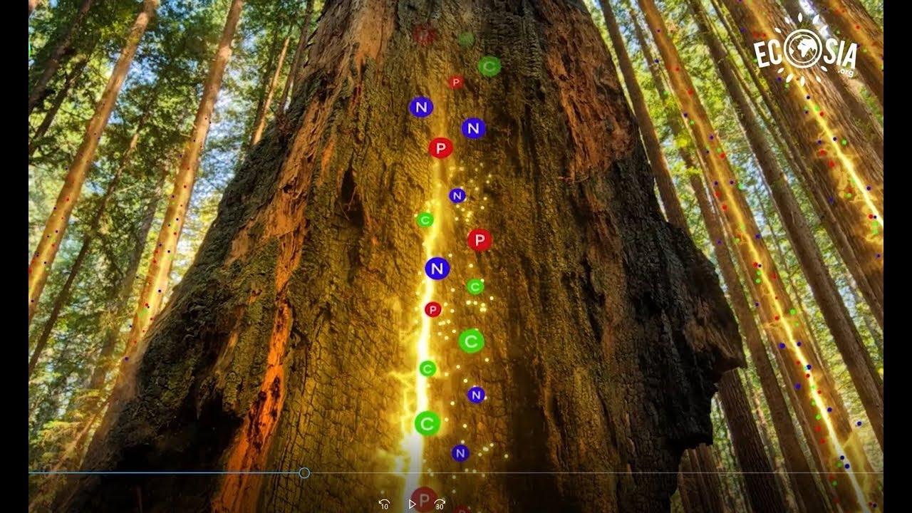 VIDEO   How Trees Talk