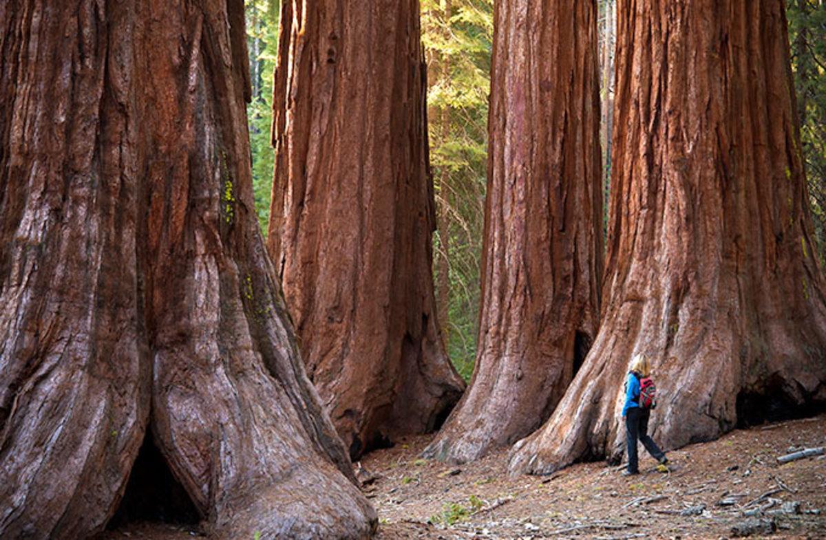 детей гигантские деревья фото каждый момент