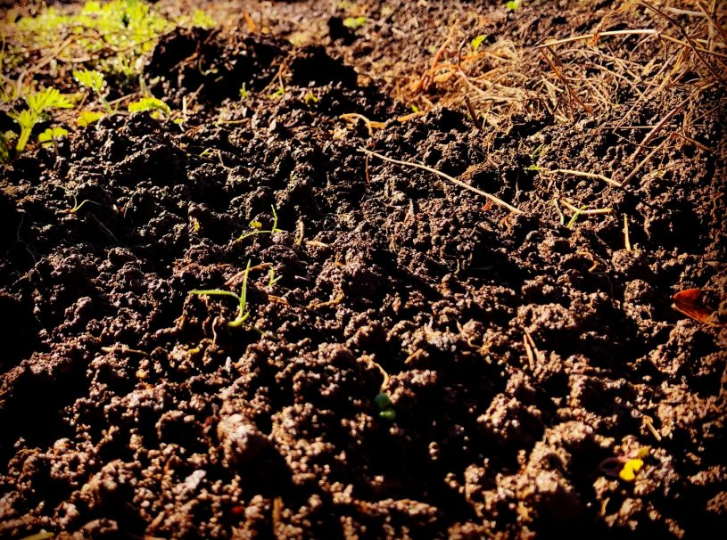 Fertile soil in the West Dry Creek Valley of Sonoma County, California, ancestral homelands of the Pomo peoples.