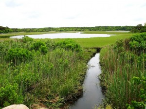 Waquoit Bay Salt Marsh - Courtesy of National Atmospheric and Oceanic Adminstration