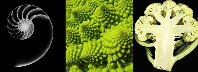 Nature's forms integrate sameness and difference through the use of proportional relationships. from left: Nautilus shell, Romanesco broccoli, Cross-section of cauliflower.