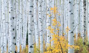 Autumn | Carr Clifton