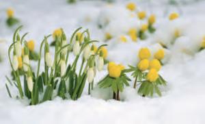 Spring | Konrad Wothe