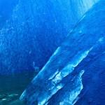 Millenial Blue
