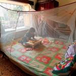 Preventing Malaria