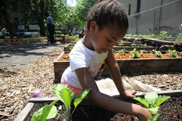 2015 Kosmos Seed Grant Recipient – Harlem Grown