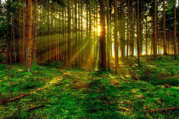 Around the Globe | 7 Hopeful Climate Stories