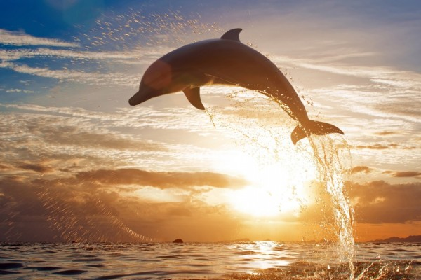 What Can We Learn From the Dolphin Who Asked Humans for Help?