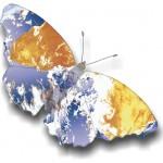 p81-#4-butterflygen