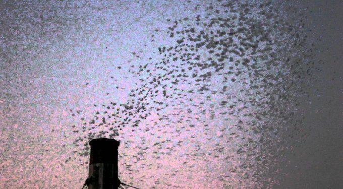 swifts2